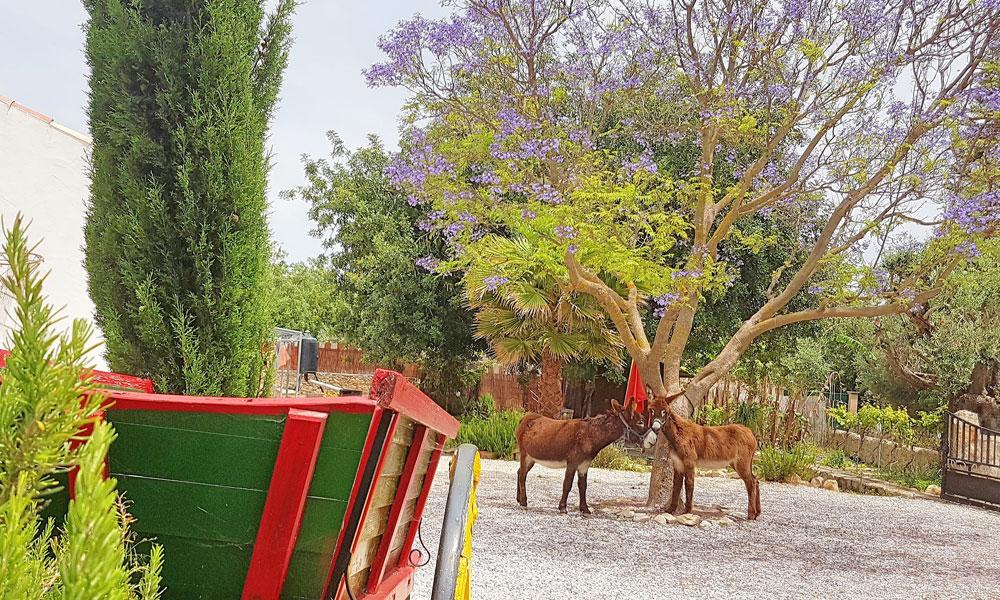 Quinta-Burro-de-Paderne